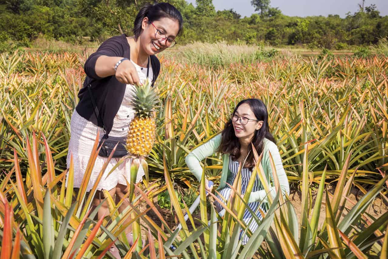 Growing Pineapples