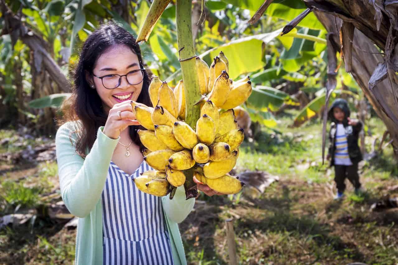 Organic Bananas in Cambodia