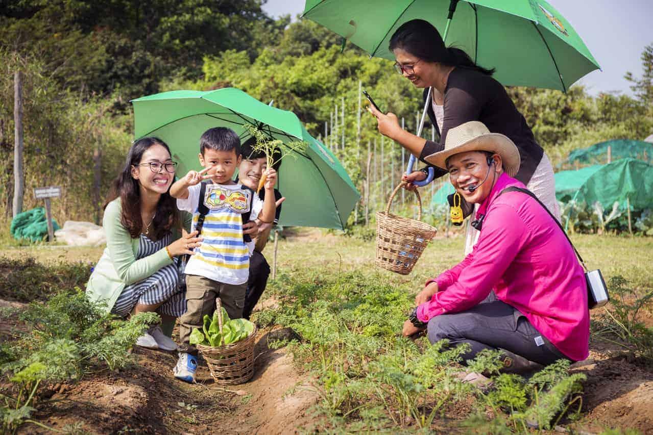 Organic Farming in Siem Reap