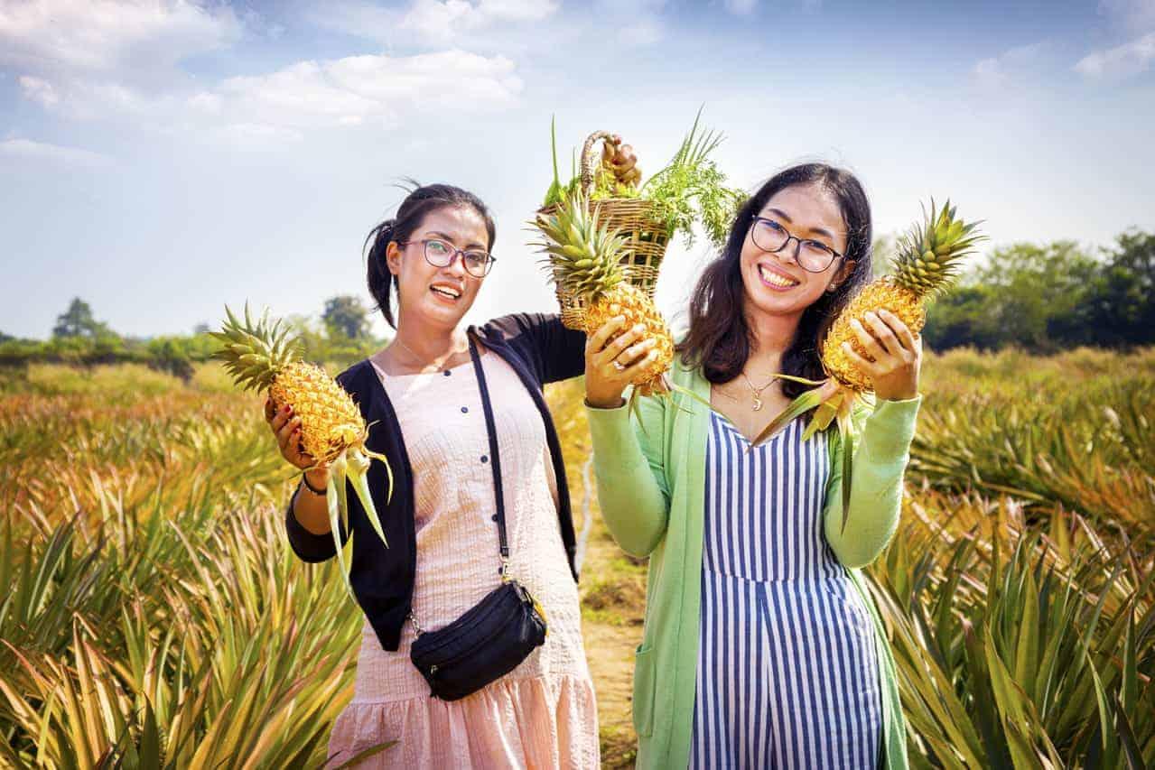 Cambodian Organic Pineapples