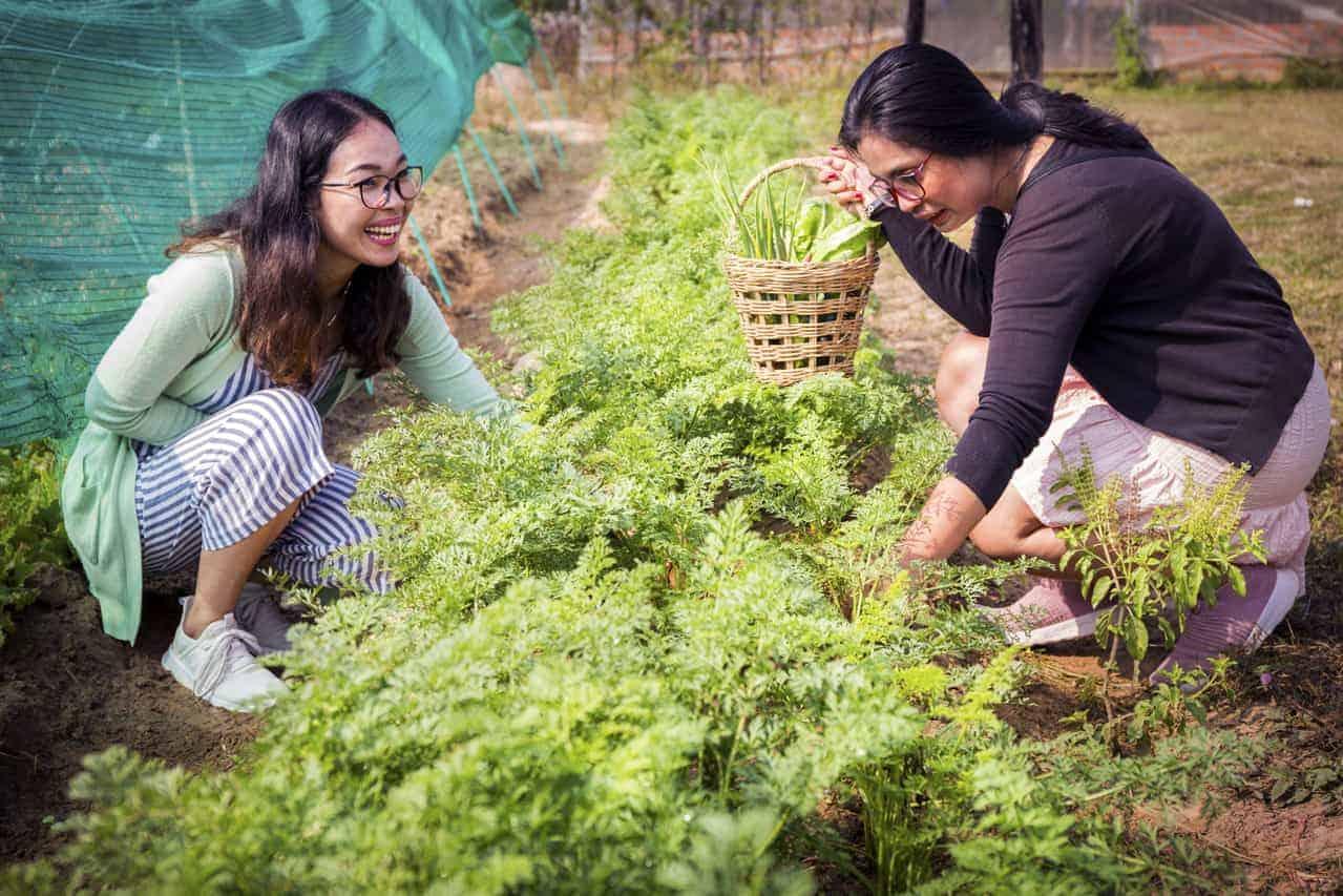 Organic Produce in Siem Reap